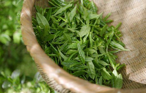 Les 3 meilleurs thés pour mincir et booster son métabolisme