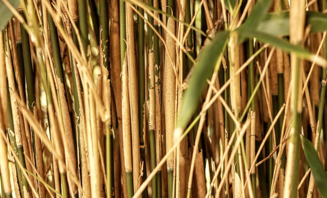Produits faits à base de bambou